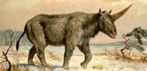 cover-r4x3w1000-57e160d31e355-licorne-prehistorique-plus-recente-qu-affirmee